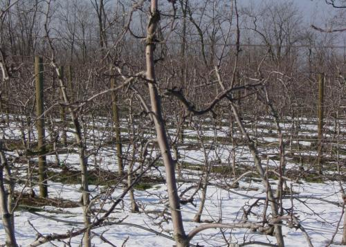 Winterruhe im Apfelgarten