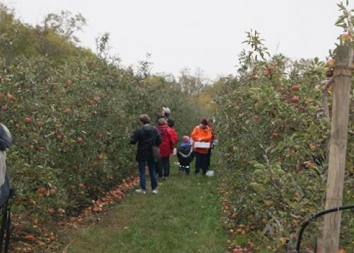 Apfelernte Herbst