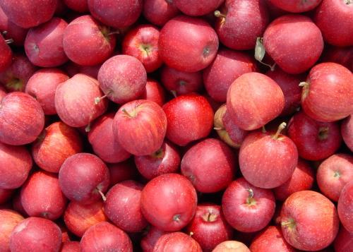 gala äpfel
