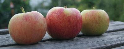 Apfelernte 2015